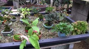 plateau de culture avec gravier pour mame bonsaï et kokedama