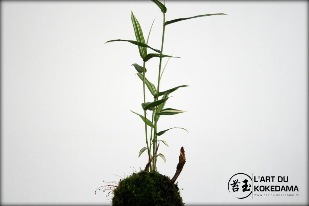KOKEDAMA-11 - 30 06 12