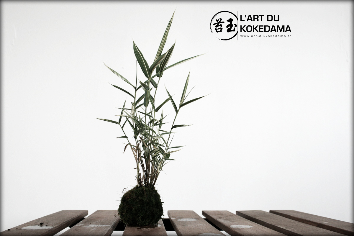 Kokedama de bambou créé au printemps