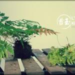 Entretien d'un kokedama après plusieurs mois de croissance