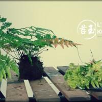 art du kokedama - entretien d'une fougère