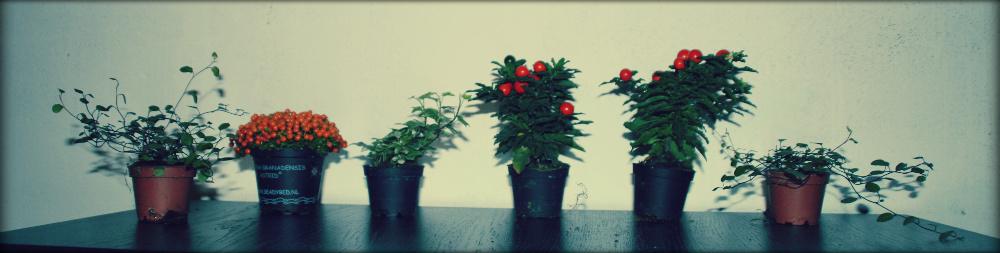 plantes destinées aux réalisations des participants