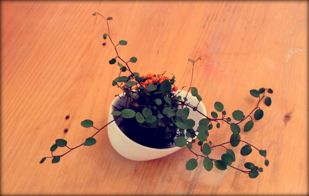 kokedama avec des plantes qui s'harmonisent bien en automne