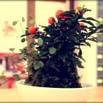 Atelier kokedama aux couleurs de l'automne