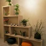 Galerie Norika – des kokedama à Béziers