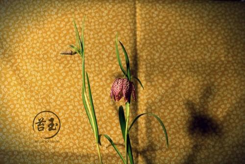 détail fleur fritillaria