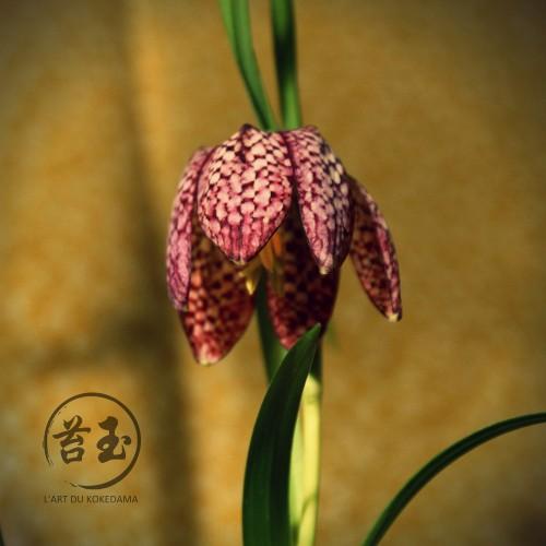Guide plante pour kokedama l 39 art du kokedama for Plante kokedama