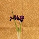 fleurs iris kokedama a vendre