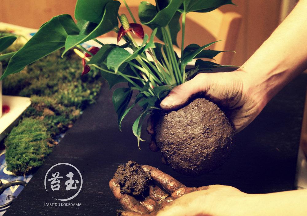 technique pour faire la boule de substrat du kokedama